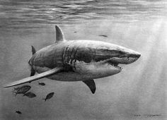 연필스케치 - 상어