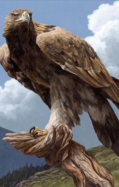 This powerful eagle is North America's largest bird of prey and the national bird of Mexico. They are extremely swift, and can dive upon their quarry at speeds of. Beautiful Birds, Animals Beautiful, Beautiful Pictures, Aigle Animal, The Eagles, Bald Eagles, Eagle Pictures, Eagle Art, Tier Fotos