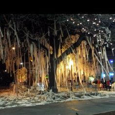 The trees were poisoned by a lovely Bama fan....they're gone now but the memories remain!!! War Eagle!!!