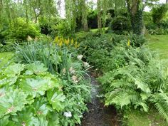 The brook makes a stunning feature across the center of the garden and the perfect spot for water-loving plants including ligularia, gunnera, ferns, and filipendula.
