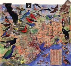 multi bird map