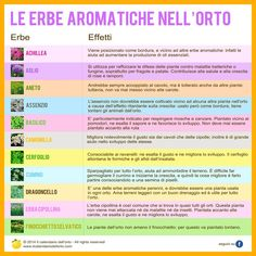 Le erbe aromatiche nell'orto Growing Plants, Growing Vegetables, Farm Gardens, Outdoor Gardens, Chlorophytum, Greenhouse Gardening, Garden Living, Nature Plants, Exterior