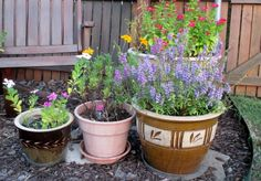 Lazy Gardening: Container planting offers convenience, greater flexibility (Richard S. Buse photo).