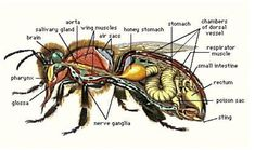 A little knowledge about an incredible insect.