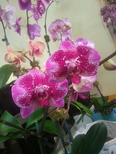 LUVly in abundance at Ginny's Orchids on Morse Boulevard. #orchids #flowers #GinnysOrchids #iluvwinterpark #iluvparkavenue #pink