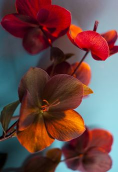 list of exotic flowers names Exotic Flowers, Orange Flowers, Amazing Flowers, Pretty Flowers, Orange Color, Colour, Art Floral, Beautiful Flowers Wallpapers, Flower Aesthetic