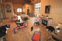 Unser Katzenbereich auf Gut Aiderbichl Iffeldorf Country Life, Farm Animals, Cats, Angels, France, Bayern, Country Living, Gatos, Kitty
