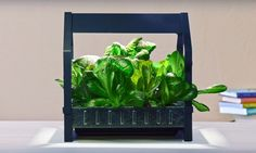 The furniture retailer has just unveiled its new KRYDDA/VÄXER series, a hydroponic growing system that will allow anyone to easily grow fresh produce at home.