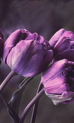 45 Ideas For Nature Wallpaper Iphone Flowers Phone Cases Purple Tulips, Purple Orchids, Purple Love, All Things Purple, Shades Of Purple, Nature Iphone Wallpaper, Purple Wallpaper, Flower Wallpaper, Wallpaper Wallpapers