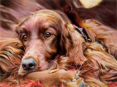 """'Settling Down"""" by Denise Finney. This print is available for purchase here: http://www.ascotgallery.com/pages/finney%20irish%20setter.htm"""