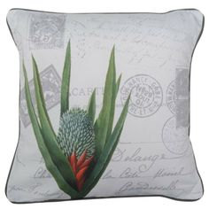 CUSHI   Aloe Postcard Cushion #pillow #cushion #homedecor Cushion Pillow, Cushions, Pillows, Aloe, Tapestry, Comfy, Amazing, Home Decor, Throw Pillows