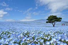日本も選ばれた!絶対に行くべき、世界の美しすぎる「青の絶景」10選 18枚目の画像