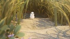 The Pixar imaginative group examined the inventive procedure in creating Piper, the main character who is an infant sandpiper taking in the ropes out on the shoreline… Animation Stop Motion, 3d Animation, Pixar Shorts, 3d Video, Motion Video, Sites Online, Sea Waves, Independent Films, Best Sites
