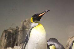 Penguins (Central Park Zoo)