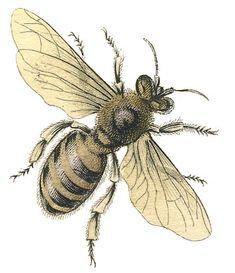 Free Printable Vintage Stock Image - Honey Bee