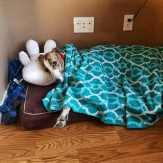 Della, fka Adele, has an awesome bed in her forever home! #homeforever #greyhounds