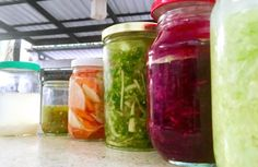 Fermented foods are an important key to the essence of our happiness and the vitality of our immune system. They colonize our microbiome a new frontier in human physiology and are an age old cultural healing food we love! . .  Here we have: 🌴Classic Kraut 🍃Purple Kraut with Beetroot, Mint & Red Onion 🌴🌶 Kimchi with fresh chili paste, burdock root and daikon radish 🍃Pickled Daikon and Carrot with fresh Ginger and Turmeric (thank you 🙏🏼 @gaiaherbs for the fresh organic turmeric!) . 🌴…