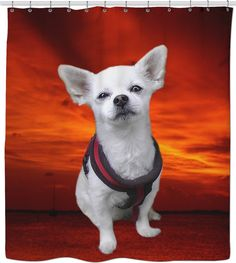 Check out my new product https://www.rageon.com/products/dog-chihuahua-shower-curtain?aff=BWeX on RageOn!