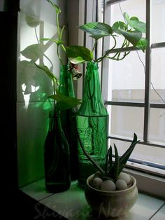 I Discover My Style : green corner in kitchen
