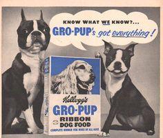 Cute Boston Terriers in 1950's ad