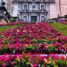 """Ionau """"Temps de flors!!! La Catedral"""" Mansions, House Styles, Instagram Posts, Flowers, Fancy Houses, Mansion, Manor Houses, Mansion Houses, Villas"""