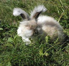 This makes me happy!    Rabbit Fibers from Blossom Organic Rabbit Wool  by RunningBugFarm, $5.00