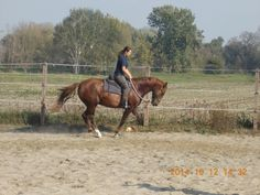 Hungary, Horses, Travel, Animals, Image, Viajes, Animales, Animaux, Destinations