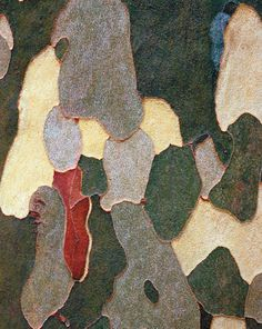 This may look like abstract art, but it's actually something that might be right outside your door: the bark of a sycamore tree. From MOTHER EARTH NEWS magazine. Abstract Nature, Abstract Canvas, Oil Painting On Canvas, Painting Abstract, Patterns In Nature, Textures Patterns, Art Grunge, Nature Artists, Tree Bark