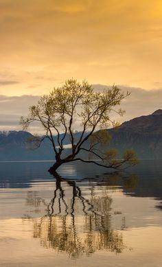 Lake Wanaka, New Zealand by Jason Rosewarne The Beautiful Country, Beautiful World, Beautiful Places, Beautiful Pictures, Photography Pics, Nature Photography, Lake Wanaka, Lone Tree, Unique Trees