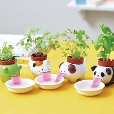 These tiny planters that use their tongues to lap up water. | Can You Get Through This Post Without Spending $50?