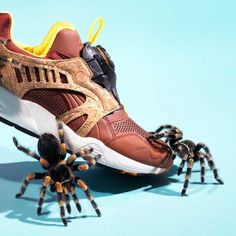 Animals vs Sneakers: Photo Series by Joseph Ford