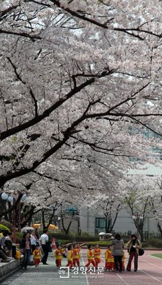 Spring of Seoul, South Korea