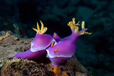 An Underwater Photographer's Guide To Bali - Part II Scuba Diving Bali, Underwater Photographer, Travel Photography, Travel Photos