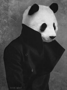 Life isnt just black and white. Animal Masks, Animal Heads, Panda Head, Panda Wallpapers, Panda Love, Laura Lee, Spirit Animal, Pet Portraits, Cool Pictures