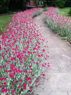 Have a peek at this web-site speaking around Front Yard Shaded Landscaping Front Garden Landscape, Landscape Design, Garden Design, Shade Landscaping, Front Yard Landscaping, Michigan Landscaping, Love Garden, Dream Garden, Outdoor Plants