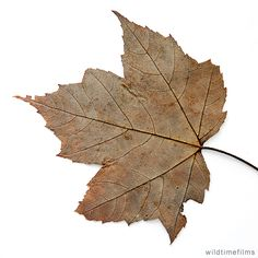 Dried up leaf.