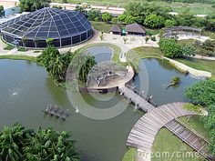Mangal das Garças ecological bigger park from soult america amazon. On the Rio Guama, the park offers visitors a piece of rainforest within the historic city center of Belem do Para.