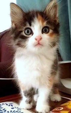 Kitten ❤️