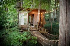 Turns out, we all love a treehouse.