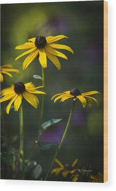 Black-eyed Susan Wood Print by Christina Rollo.  All wood prints are professionally printed, packaged, and shipped within 3 - 4 business days and delivered ready-to-hang on your wall. Choose from multiple sizes and mounting options.