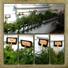 My new herb garden! Tags made digitally, printed and laminated, and put into a clothespin which we wrapped with wire for a stand. Right under my kitchen window!!