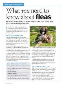 #Veterinary client handout: What you need to know about fleas - dvm360