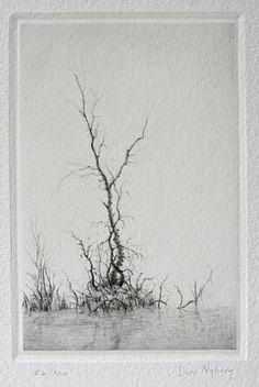 Torrnål - Spegling av Lars Nyberg - klicka här för att se bilden i ytterligare förstoring.
