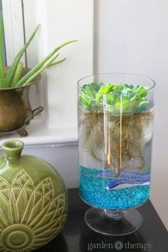 Follow along with these instructions to make an easy tabletop indoor water garden in a vase, with a few friends thrown in for company!  #WaterGardening
