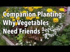 Remarkable Secrets to Growing Tomatoes in Containers Ideas Companion Gardening Embedded thumbnail for Companion Planting Flowers With VegetablesCompanion Gardening Embedded thumbnail for Companion Planting Flowers With Vegetables Vegetable Garden Planning, Veg Garden, Garden Plants, Vegetable Gardening, Easy Garden, Garden Hose, Organic Horticulture, Organic Gardening, Gardening Tips