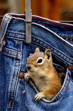 Everybody needs a pocket squirrel! Good Morning Wishes, Happy Colors, World Of Color, Colorful Furniture, Crackers, Gingham, Mom Jeans, Blue Jeans, Soup