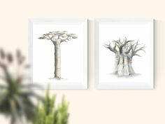 Beautiful ink prints of majestic baobab trees. The trees are in drawn in subtle tones of grey, brown and golden yellow ink on a white background. Baobab Tree, Landscaping Trees, Tree Print, Trees Beautiful, Candle Holders, Candles, Ink, Landscape, Drawings