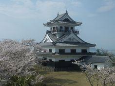 城山公園の桜 | 館山市役所