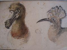 Animal Sketches, Animal Drawings, Rotterdam, Ingo, Extinct Animals, Bird Illustration, Science And Nature, Painting & Drawing, Art History