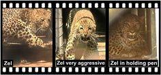 Home of Leopard.tv Wildlife Magazine, Shayamanzi wildlife ranch and wildlife music Mystery, June, Articles, Tv, Reading, Television Set, Reading Books, Television